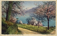 Carte postale Bords-du-Leman - Suisse